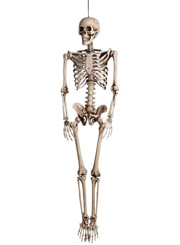 Life size Skeleton prop - Hanging Skeleton